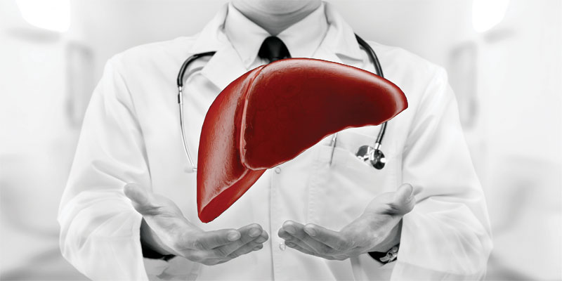 support your liver